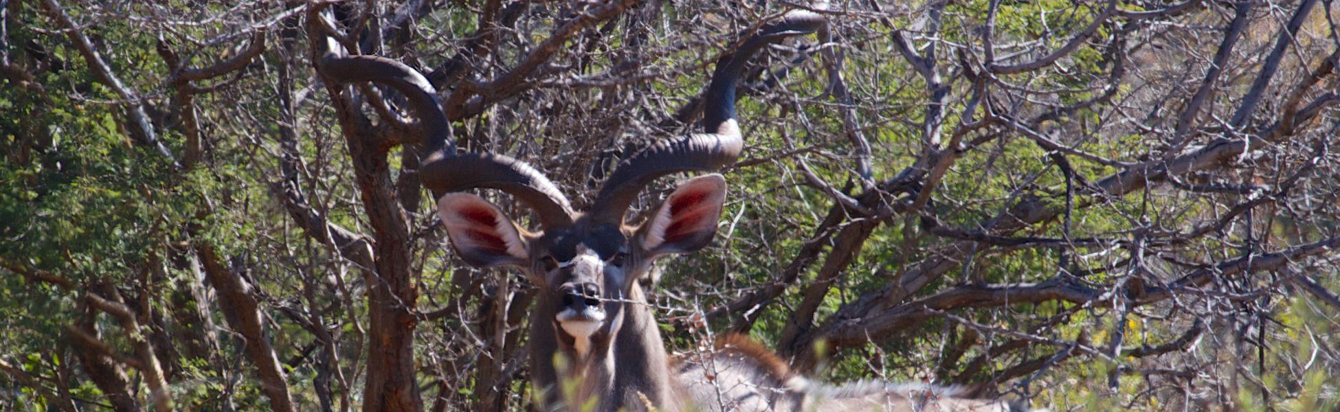 Kudu Header